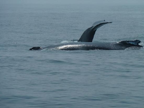 SeaCoast Inn: Le balene