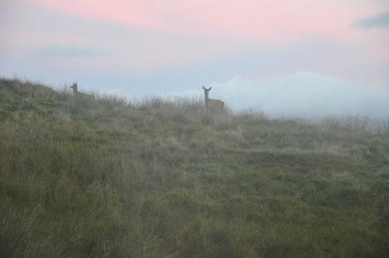 Glengarry House: Tyndrum deers,29 09 2010