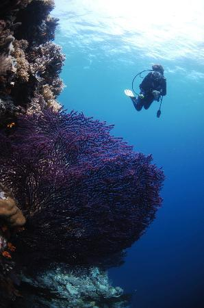 Wakatobi Dive Resort: Great Reefs