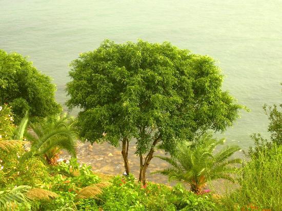 Mellieha Bay Hotel: fantastic  green view over Mellieha Bay from hotel balcony after a good rain