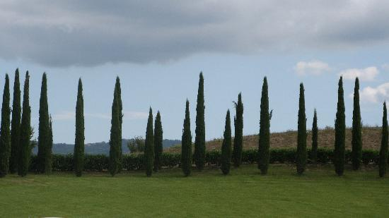 Villa Rioddi: Gotta love the Italian cypress!!!