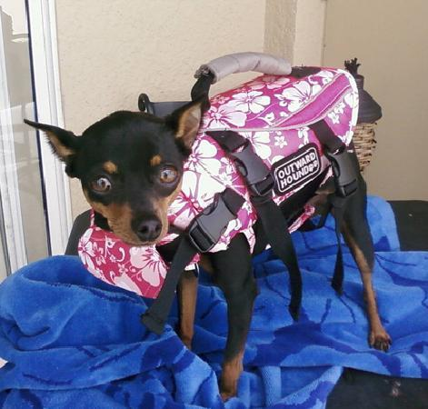 Clarion Resort Fontainebleau Hotel: Pup in her Life Jacket!
