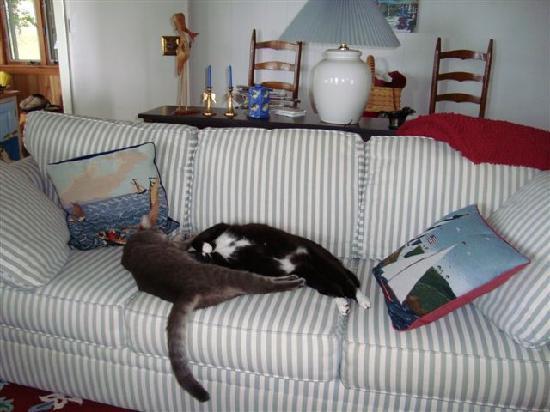 Residence Inn By Marriott Virginia Beach Oceanfront Sleepy