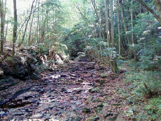 Fiery Gizzard Trail