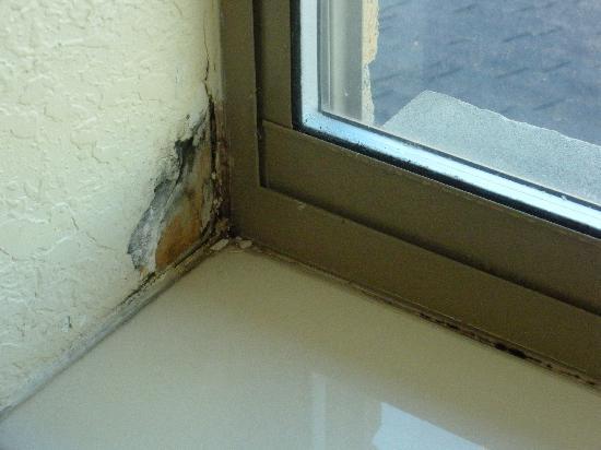 Super 8 Kokomo: this is the corner of the window...mold/mildew build up