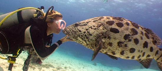 Lizard Island Resort: Lizard Island - Diving 2