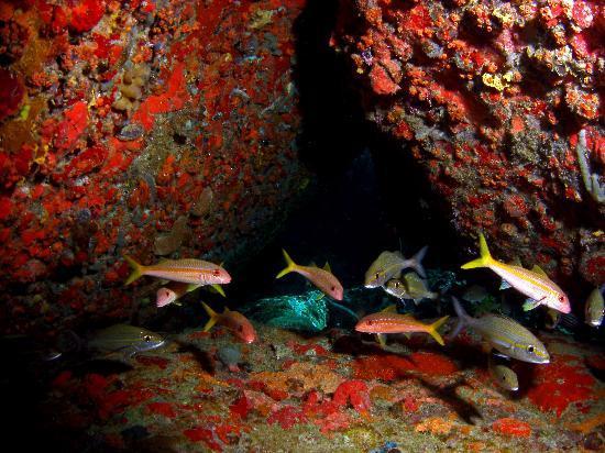 """Culebra Divers : Cayo Yerba """"Arch"""" Dive Site"""