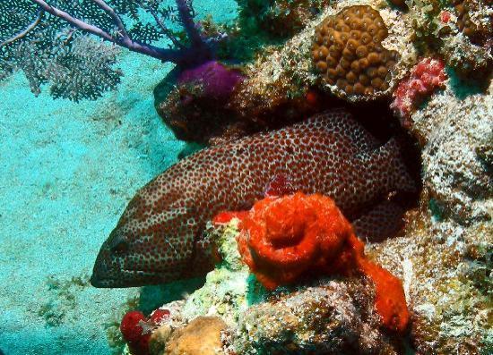Culebra Divers: Carlos Rosario Dive Site