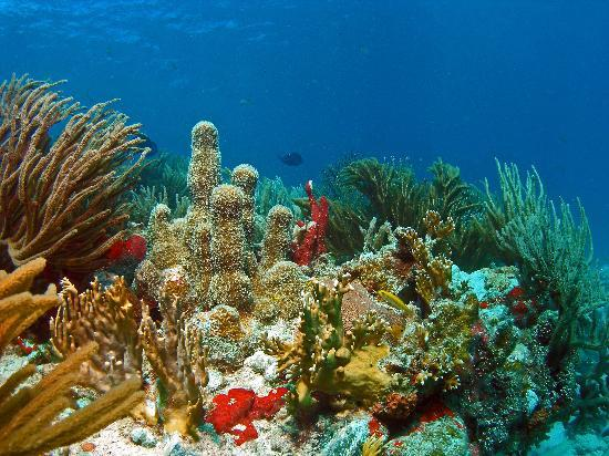 Culebra Divers : Luis Pena Canal Dive Site