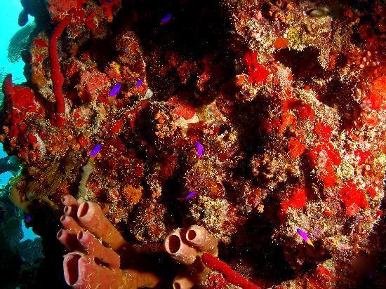 Culebra Divers : Punta Tamarindo Dive Site