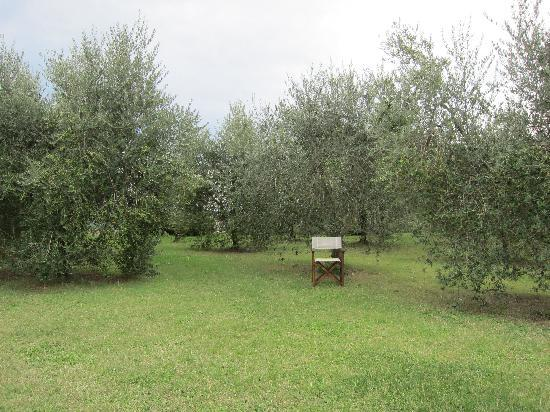 Agriturismo Podere San Lorenzo: Olive trees and a chair on the farm