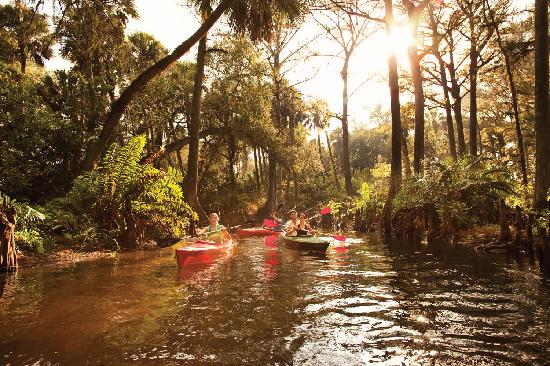 Kayaking in Florida's nature