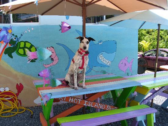 "Tiki Hot Island Shop: ""Tiki"" the greeter at the shop..."