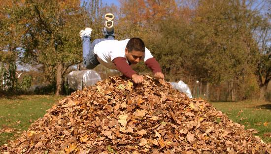 Clifford Country Bed & Breakfast: jumping in the Leaves Pile - Fall time