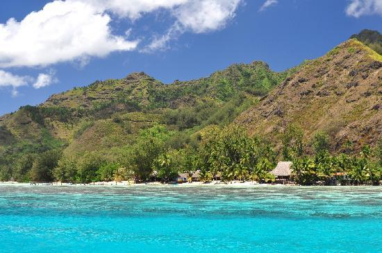 Moorea, Fransız Polinezyası: The coast as seen from a lagoon tour. Yes, the water really does look like gin!
