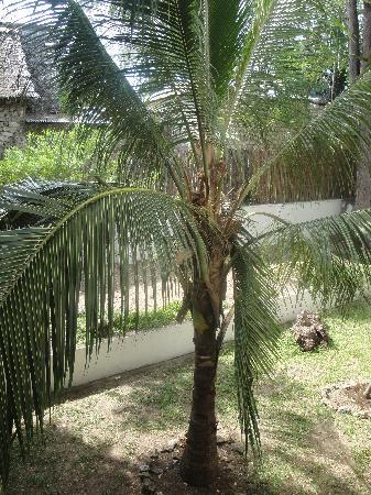Kahama Hotel: trees