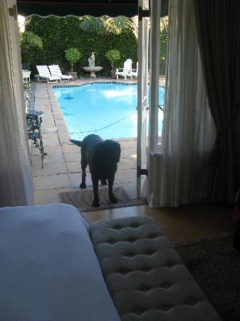 Carslogie House: Blick durch Eingang zum Pool