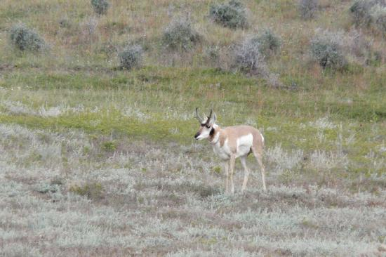 Theodore Roosevelt National Park: more wildlife