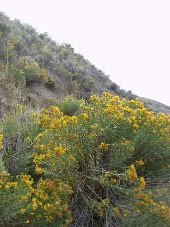 Medora, Dakota Północna: Inside Roosevelt National Park