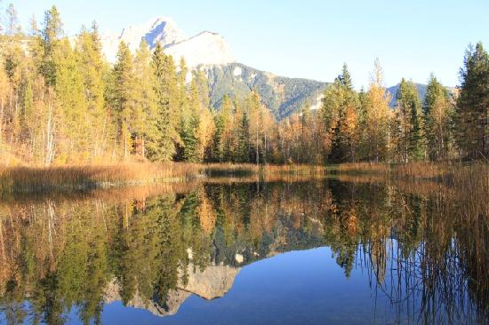 Goldenwood Lodge: Reflections on the pond!