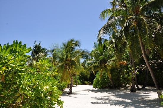 Baros Maldives: Barfußinsel