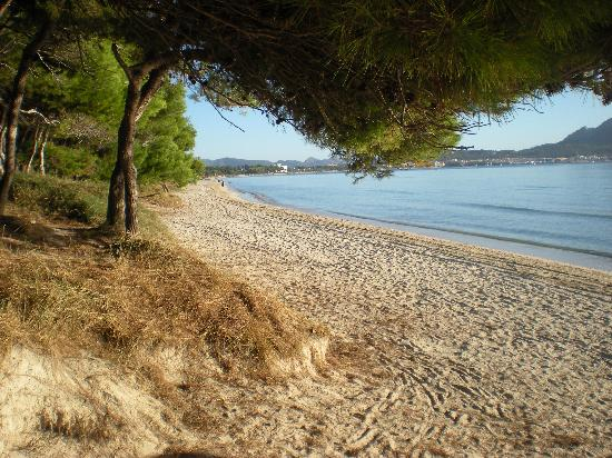 Platja d'Or: Beach at the hotel
