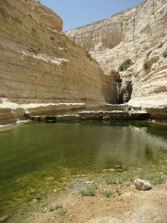 Largest oasis in Israel