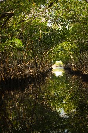 Everglades City Motel: Airboat trip through the mangroves
