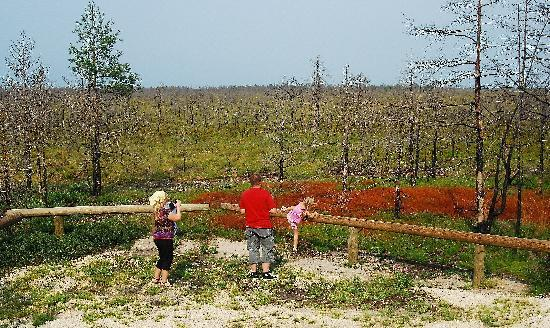 Estland: Läänemaa Suursoo - Big bog of Laanemaa