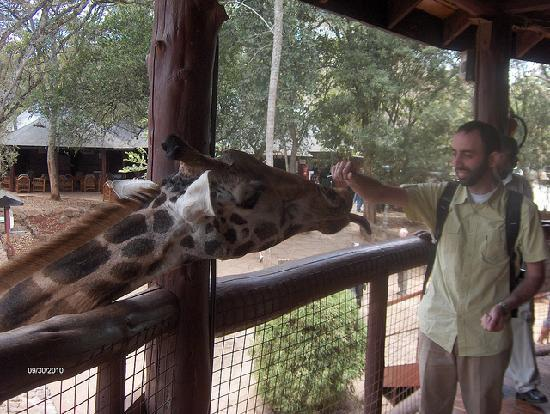 Nairobi, Kenia: Feeding the giraffes