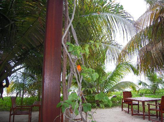 Village du Pecheur: Restaurant Gartenbereich