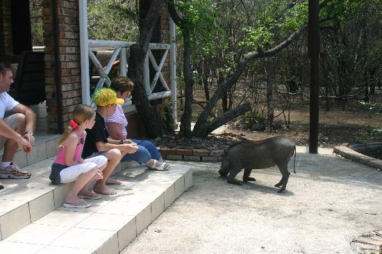 "Call of Africa : We loved ""meeting"" the Warthog!"