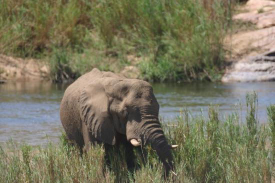 "Marloth Park, África do Sul: Saw a herd of ""ellies"" with babies right by the fence"