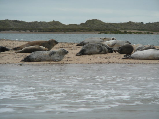 Temples Seal Trips & Blakeney Point
