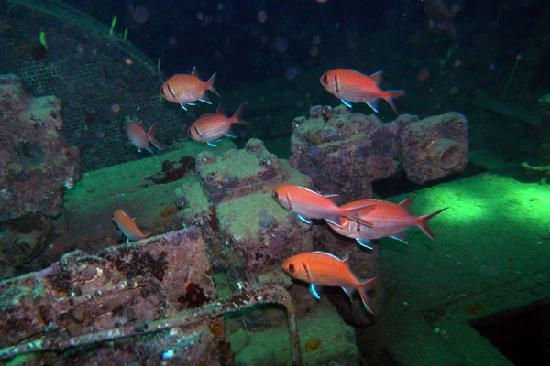 Barbados Blue: Soldierfish hanging out at the Wreck