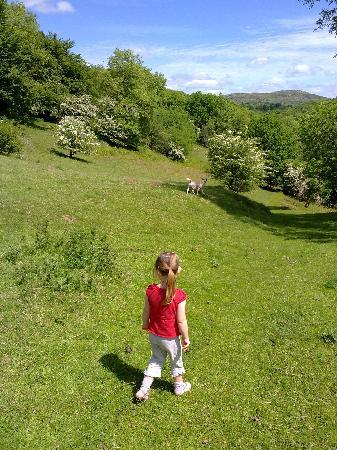 The Glynhir Estate: Wonderfully free