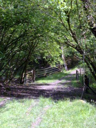 The Glynhir Estate: Walk to the River