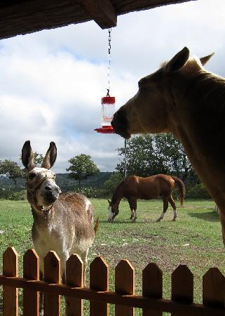 Quiet Hill Ranch - Fredericksburg: This horse gulped down all the hummingbird's nectar, hilarious!