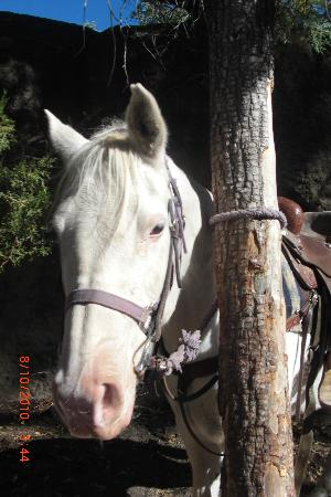 Geronimo Trail Guest Ranch: My horse Casper