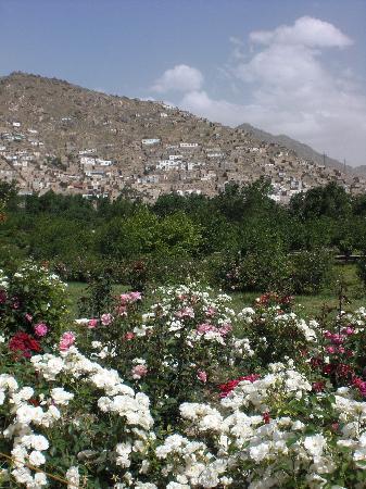 Bagh-e Babur: Roses in bloom