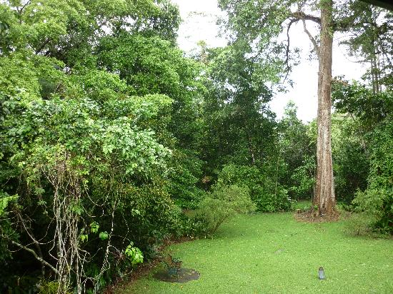 Red Mill House in Daintree: Red Mill House garden