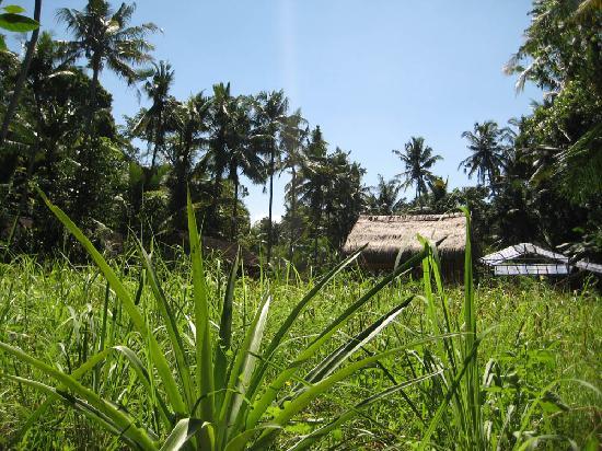 Jiwa Damai Organic Garden & Retreat: Jiwa Damai Bali Organic Garden