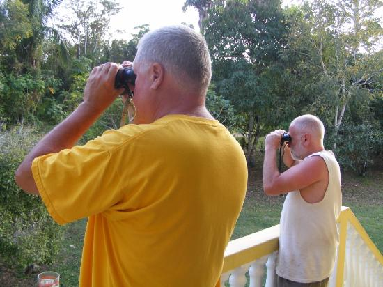 Lower Dover Field Station & Jungle Lodge: Birding