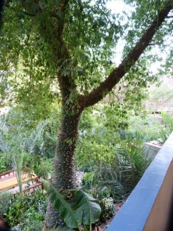 Amon Hotel Luxor: Jardin tropical - arbre extraordinaire