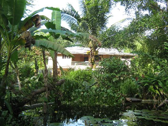 Playa Bluff Lodge : lodge vanuit de tuin