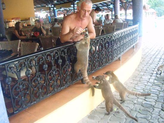 From the resort picture of clubhotel riu tequila playa del carmen - The Pool Bar Very Friedly Animals Picture Of Clubhotel