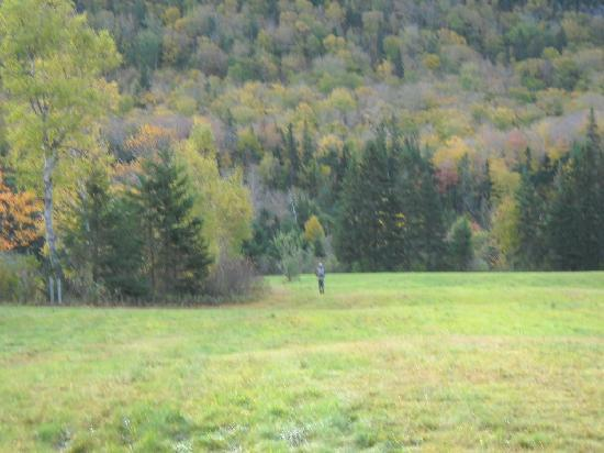 Margaree Riverview Inn: On the way to a salmon pool