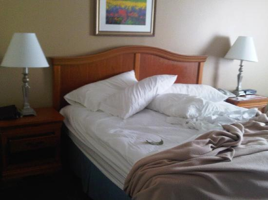 Ramada Springfield North: King Bed