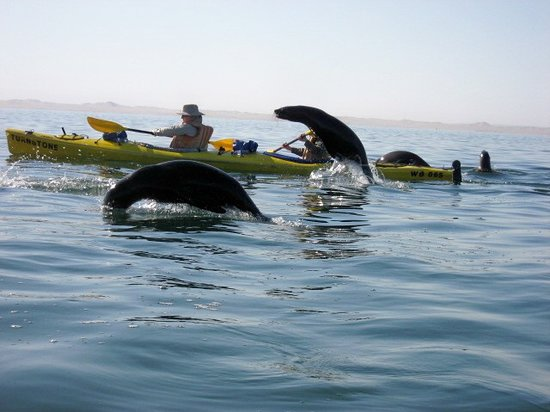 Foto de Eco Marine Kayak Tours
