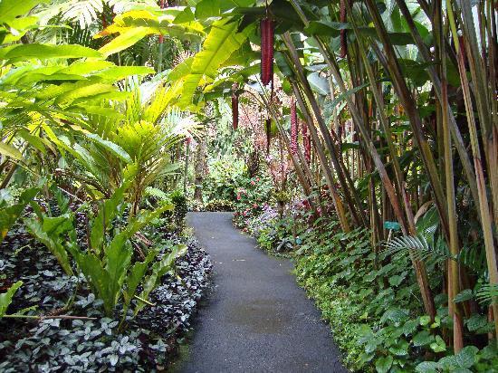 Big Island Botanical Gardens Reviews